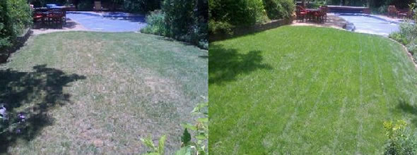 Raleigh Lawn Treatment, Organic Fertilizer